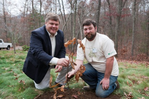 NC Arboretum reintroduces American chestnut to its grounds (blight resistant, this time)-attachment0