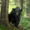 A bear visits Beaverdam. Photo by Marvin J. Wolf